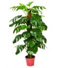 Planta artificial 135cm MONSTERA CATRAL